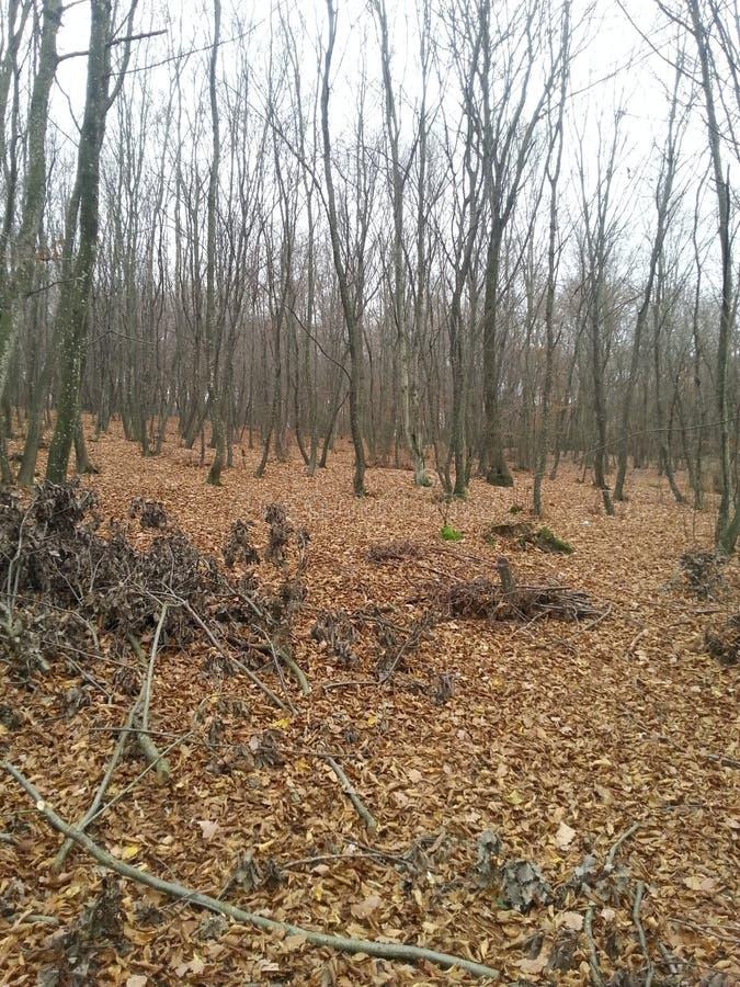 死的森林 免版税库存图片