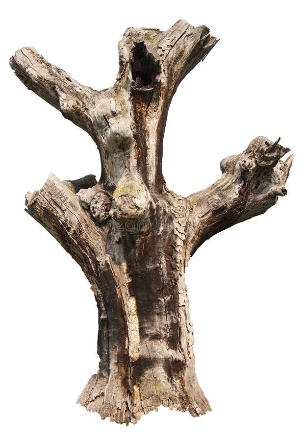 死的橡木 免版税库存照片