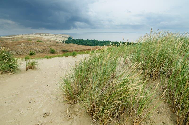 死的沙丘在Neringa,立陶宛。 免版税库存照片
