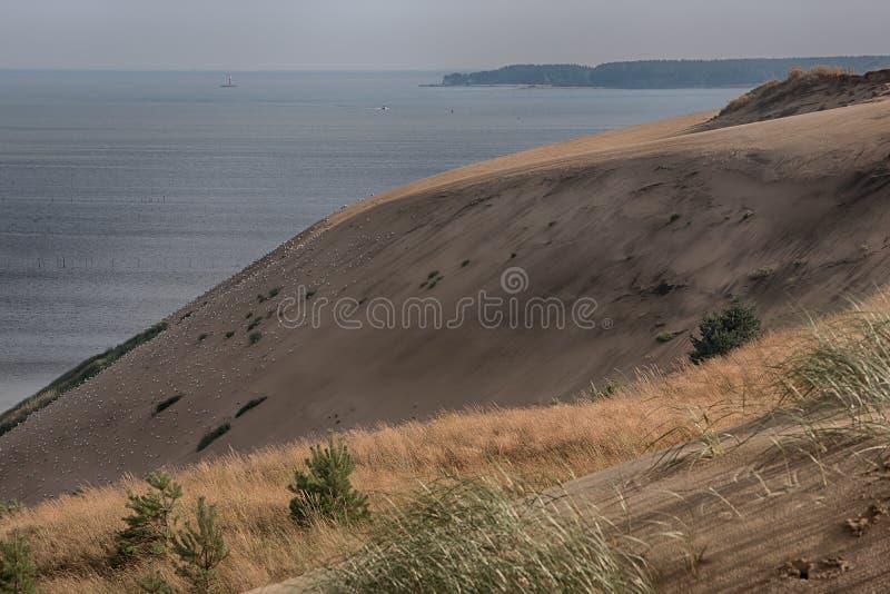 死的沙丘在Neringa,立陶宛 免版税库存图片