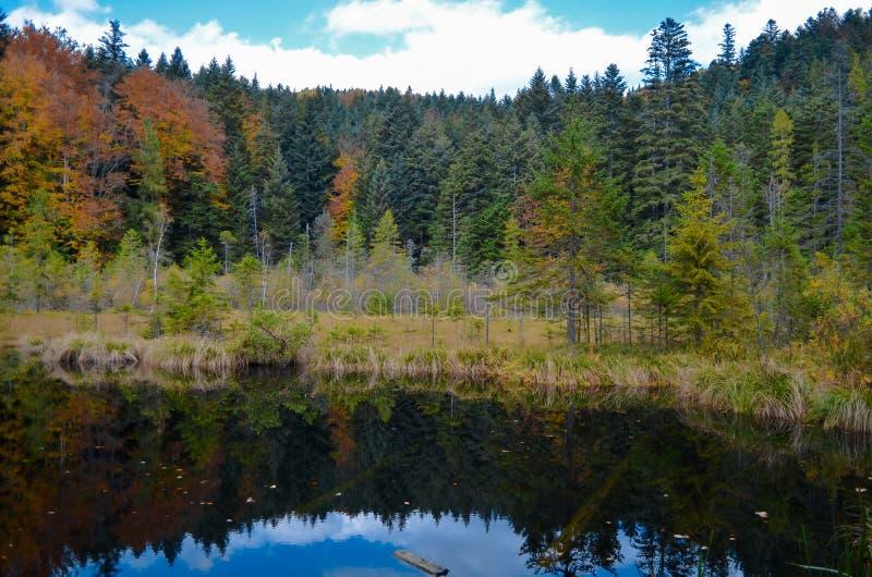 死的湖在森林里, Ð ¡ arpathian山, Skole, Uktaine 免版税库存照片
