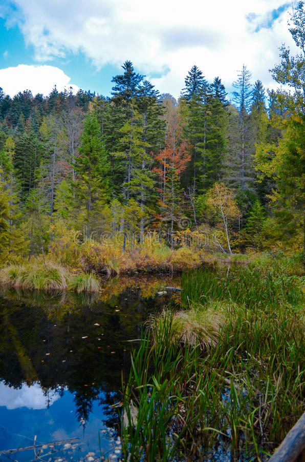死的湖在森林里, Ð ¡ arpathian山, Skole, Uktaine 免版税图库摄影