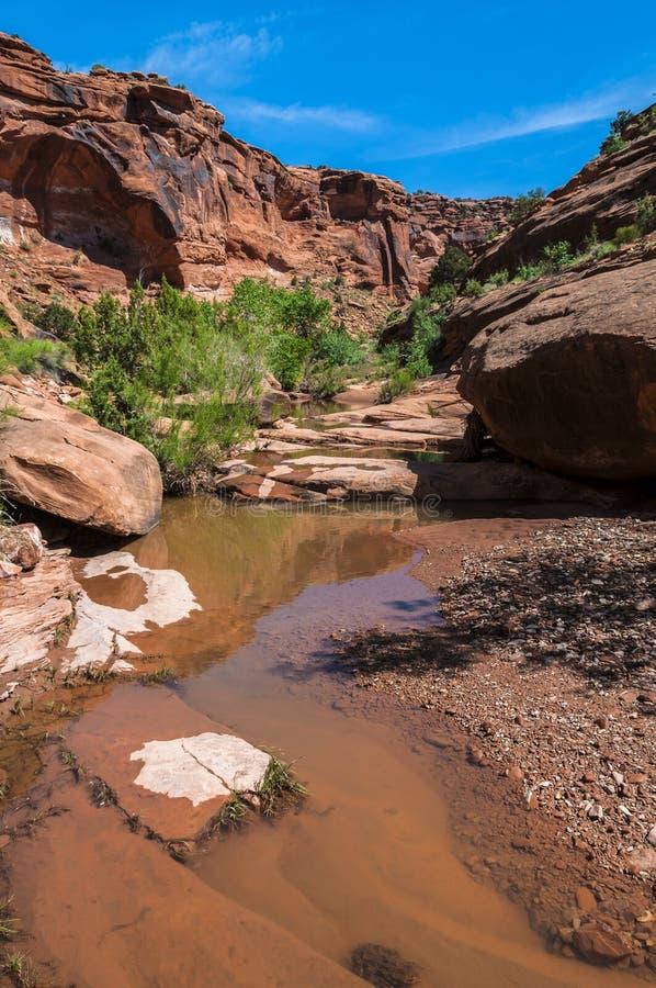 水的猎人峡谷供徒步旅行的小道默阿布犹他水池  库存图片