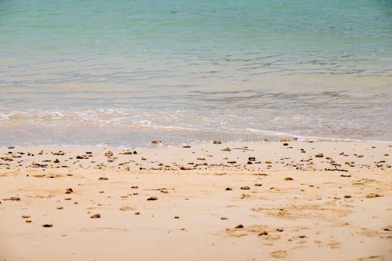 死的珊瑚和壳 图库摄影