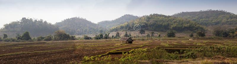 他的甘蔗领域的印地安教育的农夫,乡村Salunkwadi,阿姆贝乔盖, Beed,马哈拉施特拉,印度,南 图库摄影
