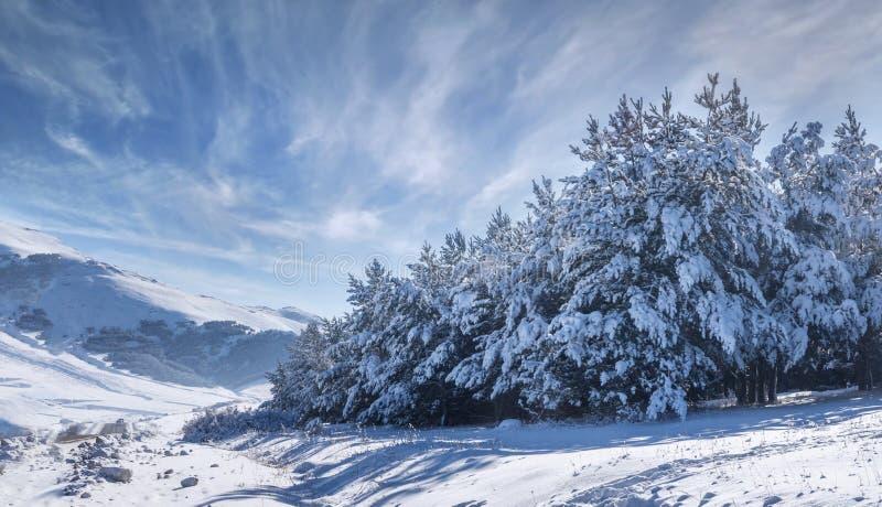 的臂章 与冷杉的美好的冬天风景 图库摄影