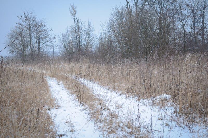 冻结的草和地面霜在冬天背景中 库存图片