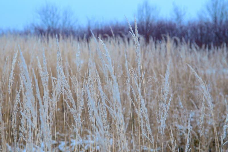 冻结的草和地面霜在冬天背景中 免版税库存照片
