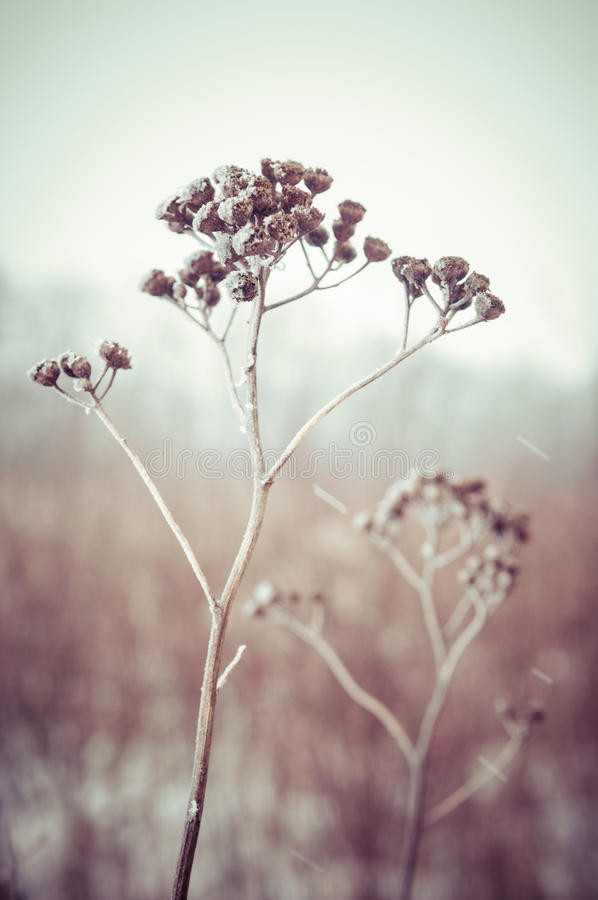 冻结的草和地面霜在冬天背景中 免版税库存图片