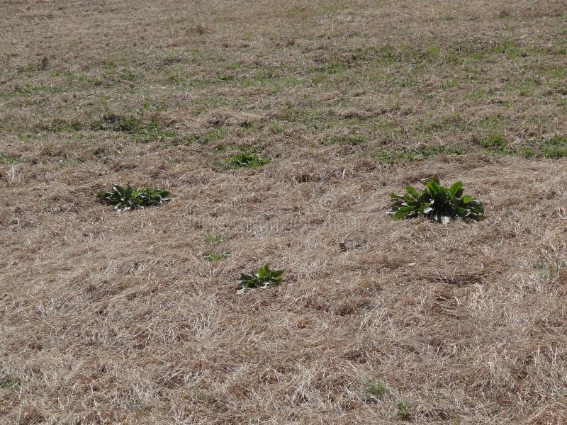 死的草和杂草 库存照片