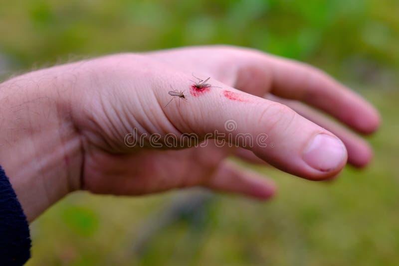 死的蚊子在手边 库存照片