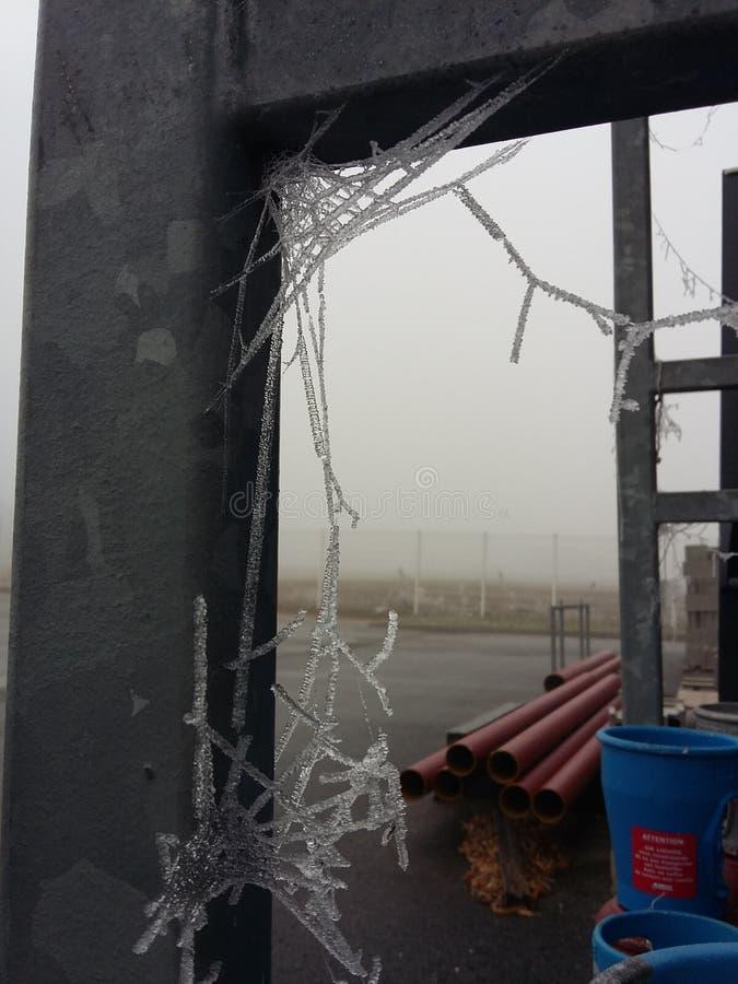 冻结的蜘蛛网 库存图片
