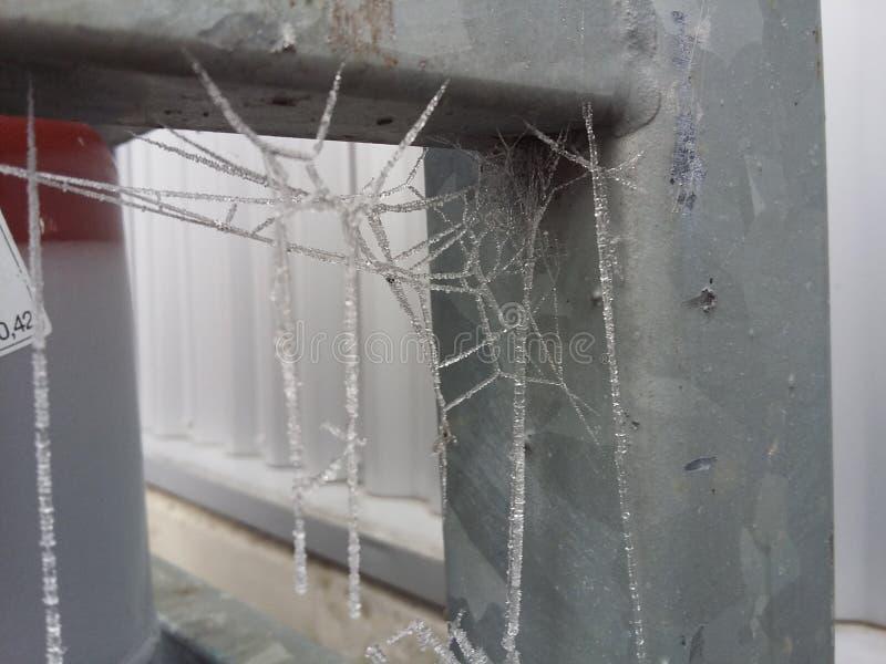 冻结的蜘蛛网 免版税图库摄影