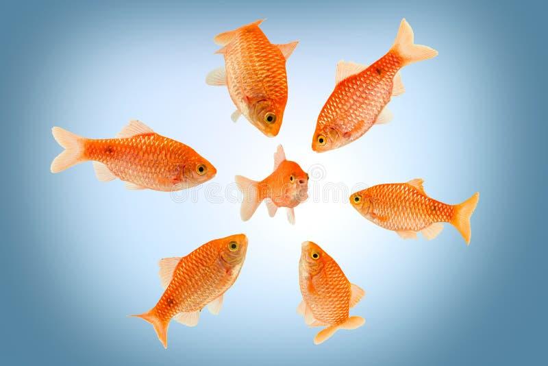 围攻的鱼 免版税库存图片