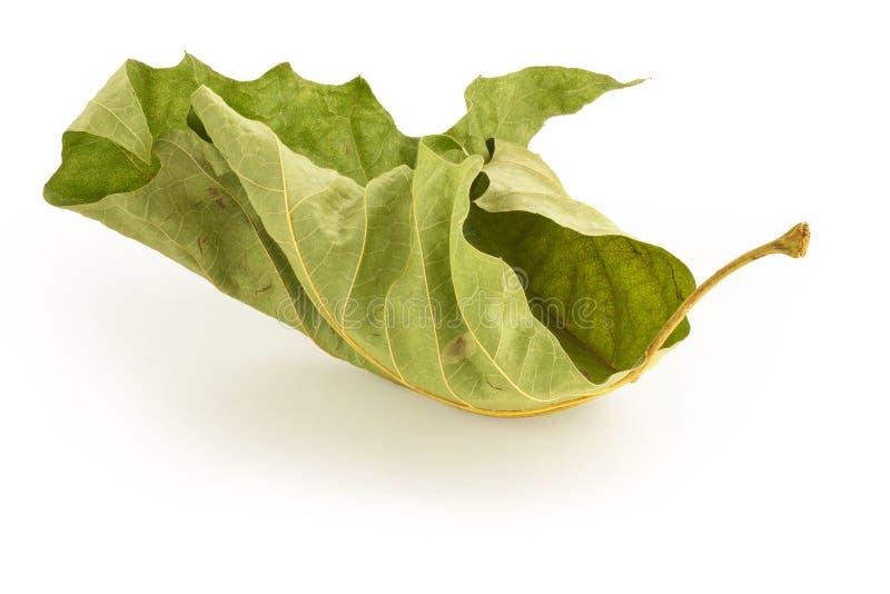 死的绿色叶子 免版税库存照片