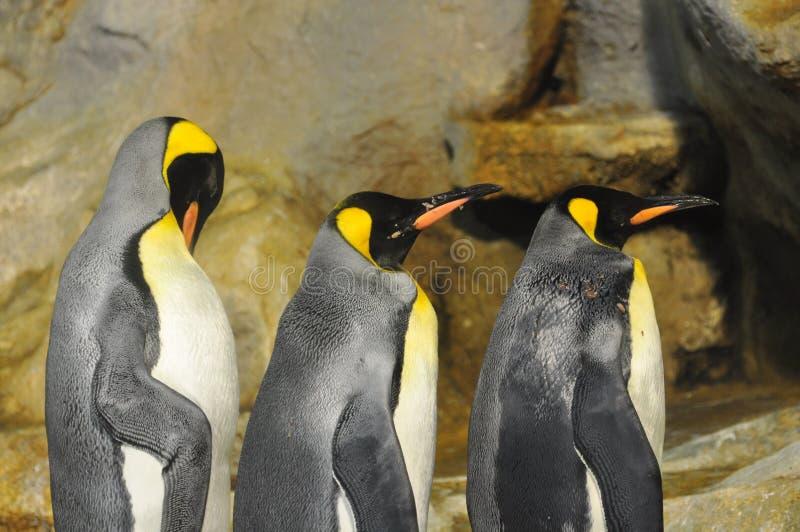 皇企鹅 免版税图库摄影