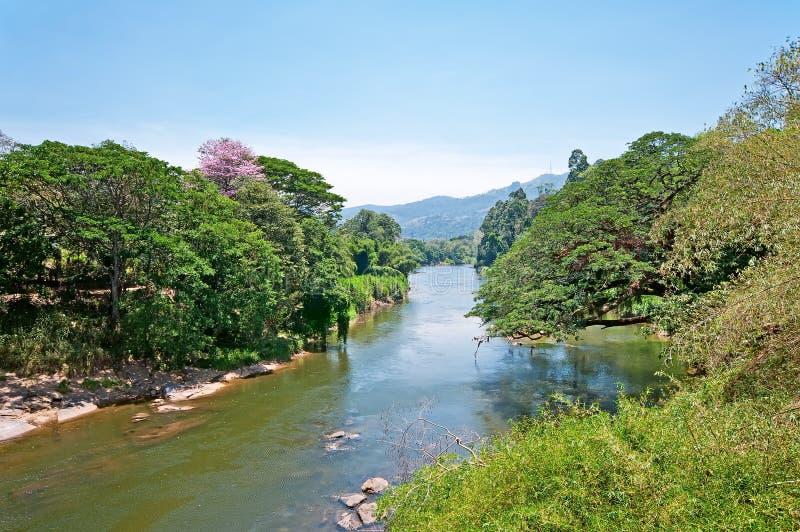 皇家植物园的河, Peradeniya在康提,斯里兰卡 库存照片