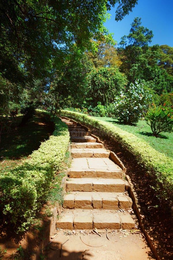 皇家植物的国王Gardens Peradeniya 康提 斯里南卡 免版税库存图片