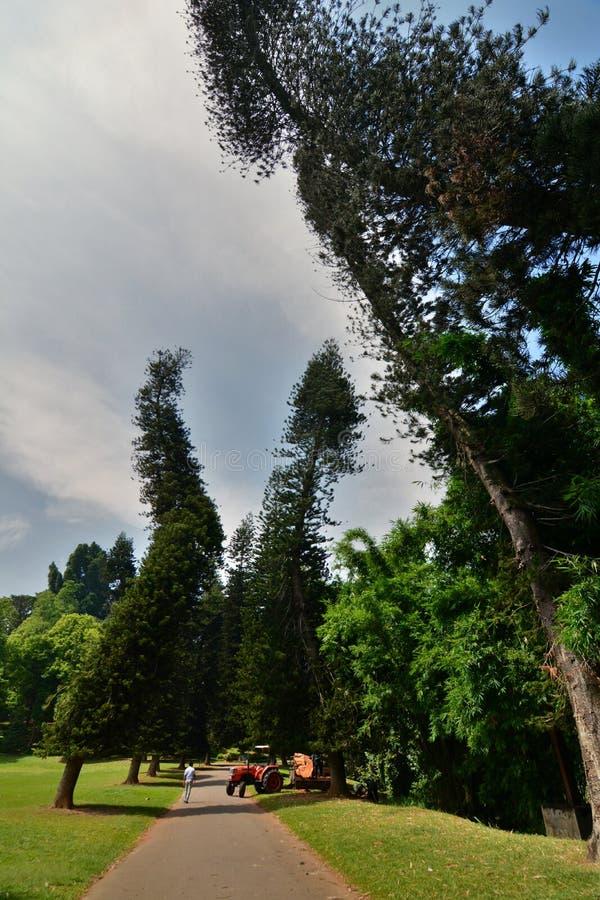 皇家的植物园 Peradeniya 康提 斯里南卡 库存图片