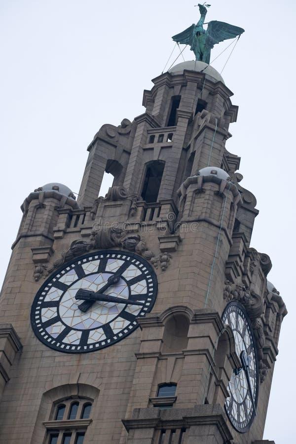 皇家肝脏大厦塔的上面在利物浦江边的 库存照片