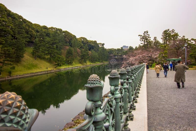 皇帝庭院旅游聚集的湖由护城河和樱花树的照片的在故宫庭院 免版税库存照片
