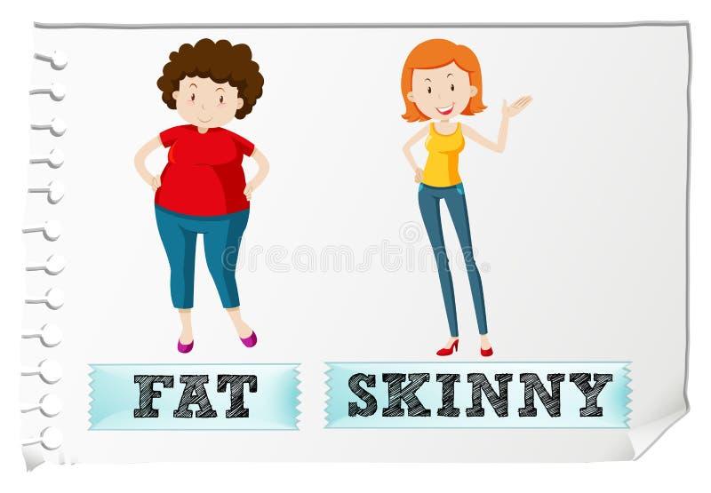 皮包骨头相反的形容词肥胖和 向量例证