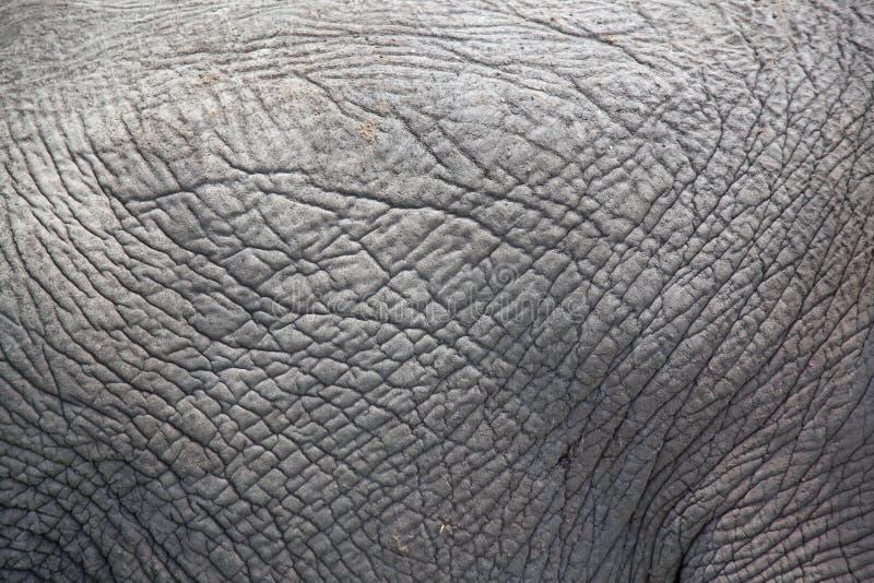 皮厚的灰色大象皮肤摘要 库存照片