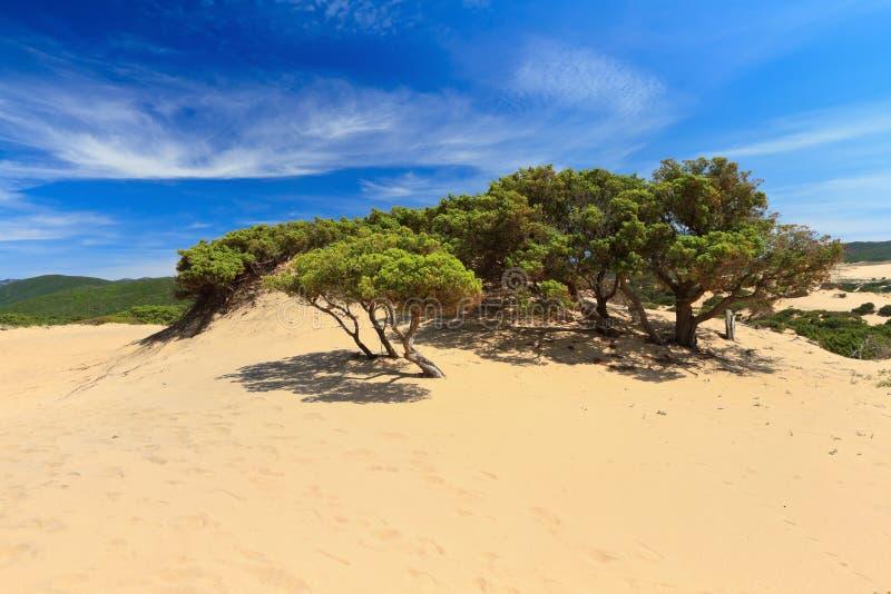 皮希纳斯沙丘-撒丁岛,意大利 免版税库存照片