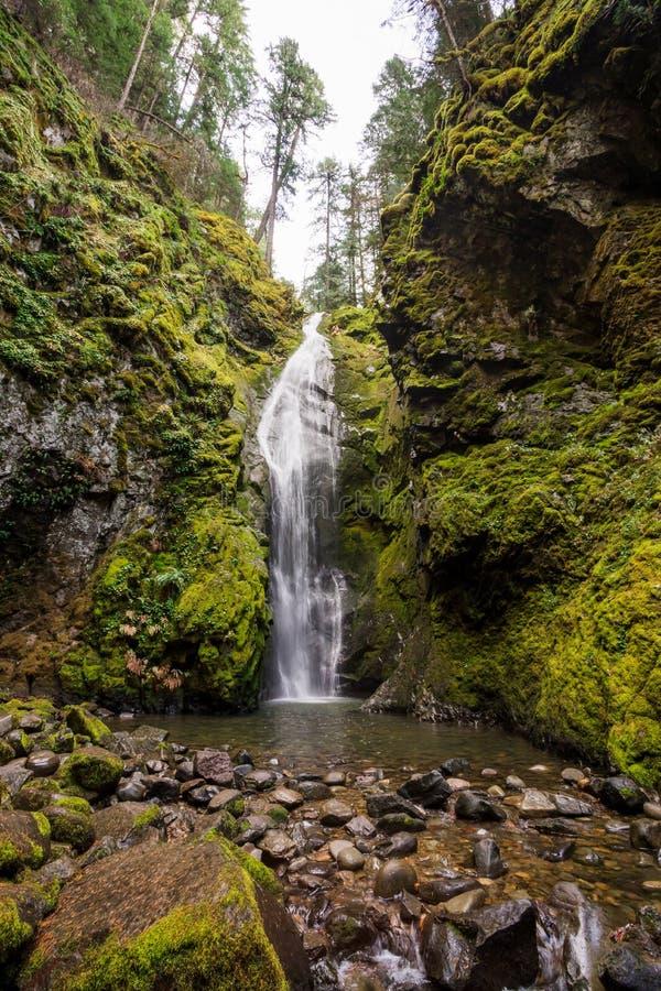 皮纳德瀑布俄勒冈州的乌姆普夸国家森林 库存照片