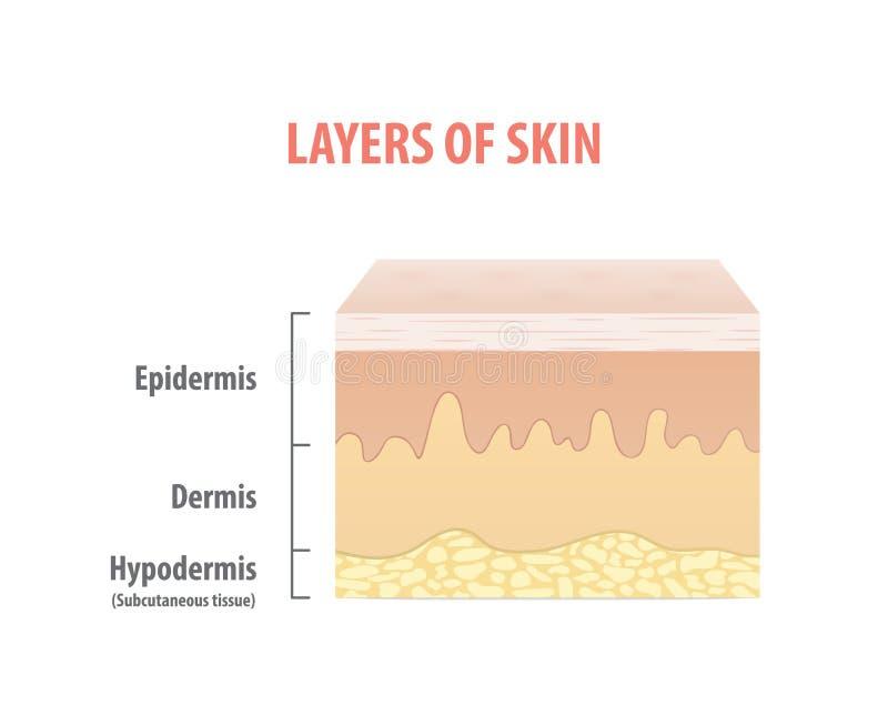 皮肤层数用图解法表示在白色背景的例证传染媒介 皇族释放例证