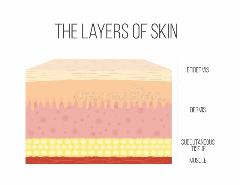 皮肤层数 健康,正常人的皮肤 库存例证