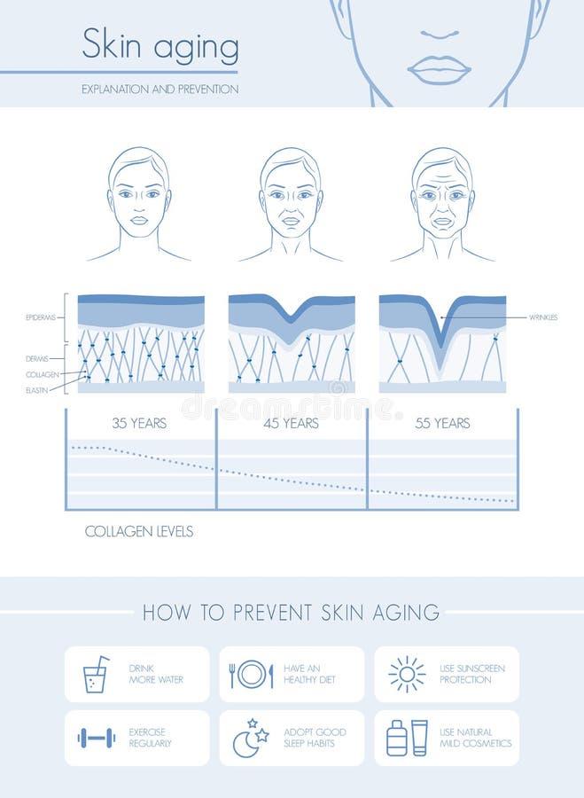 皮肤老化 向量例证