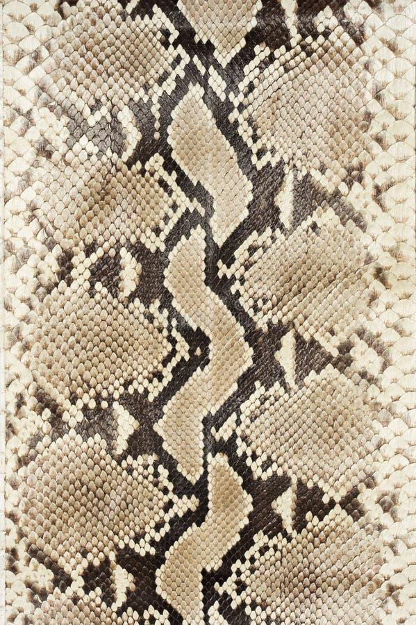 皮革皮肤蛇垂直 库存图片