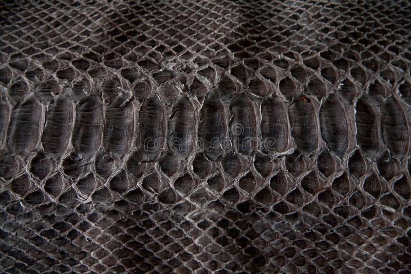 皮革,黑眼镜蛇纹理  免版税库存照片