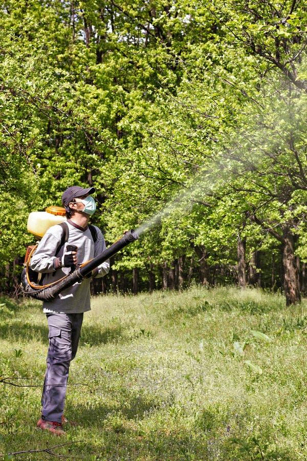 盆射树的年轻农夫与化学制品 库存照片