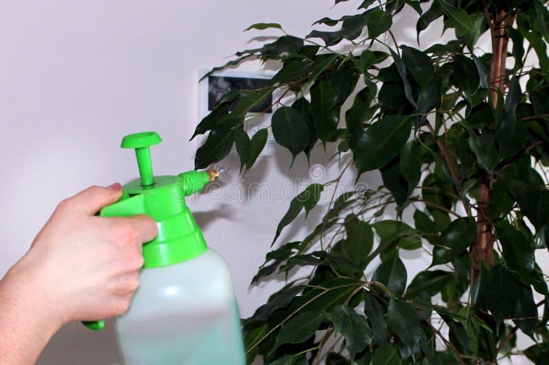 盆射植物与喷枪 免版税库存照片