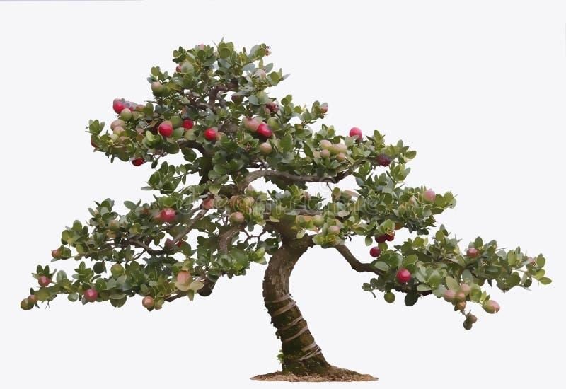 盆景例证结构树 免版税库存照片