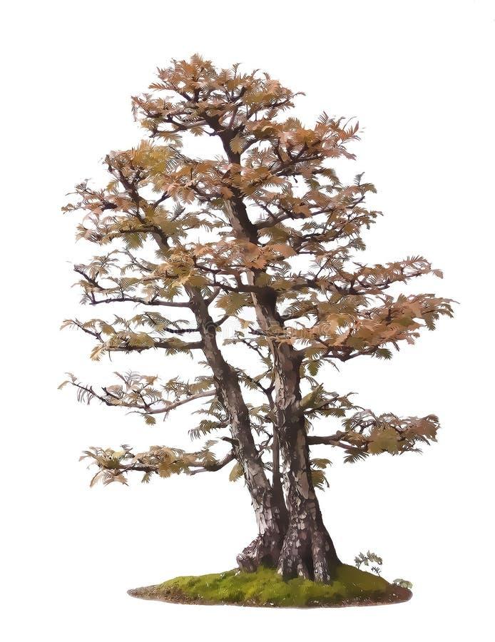盆景例证结构树 免版税库存图片