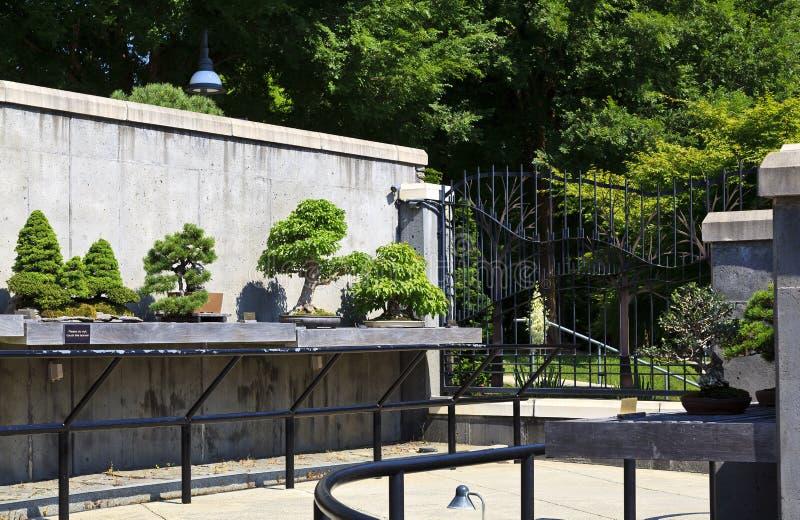 盆景在北卡罗来纳庭院阿什维尔的庭院树 库存照片