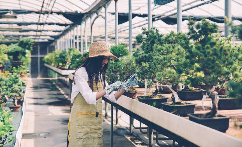 盆景温室中心 与小树的行 免版税图库摄影
