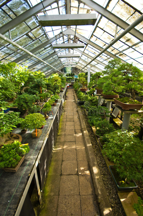 盆景温室在Walbrzych,波兰 免版税库存图片