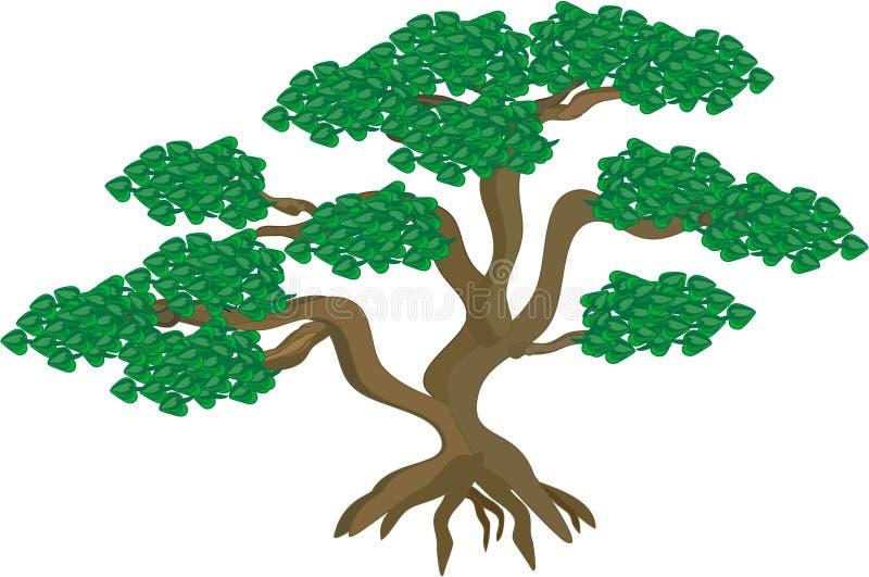 盆景结构树 皇族释放例证