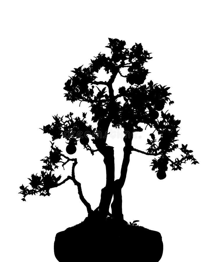盆景cucoloris 皇族释放例证