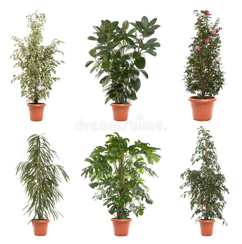 盆栽植物 免版税图库摄影