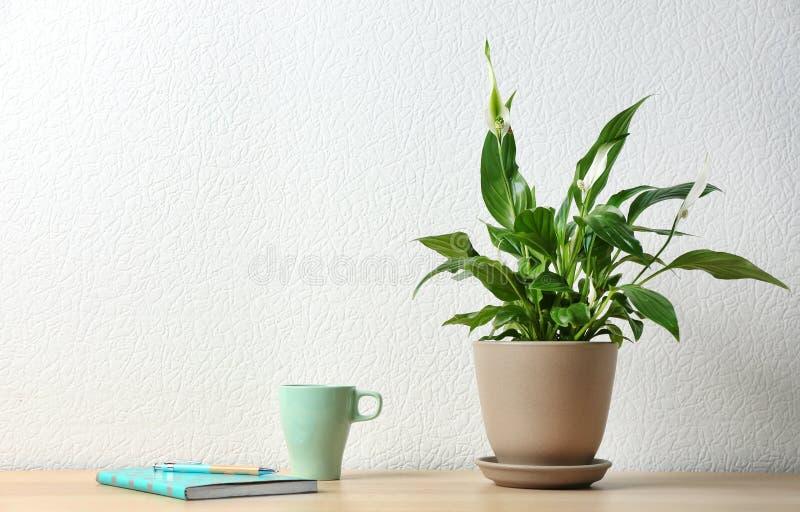 盆的和平百合植物、杯子和笔记本在木桌上在白色墙壁附近 库存照片