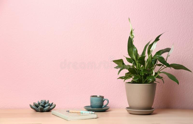 盆的和平百合植物、杯子和笔记本在木桌上在颜色墙壁附近 免版税图库摄影