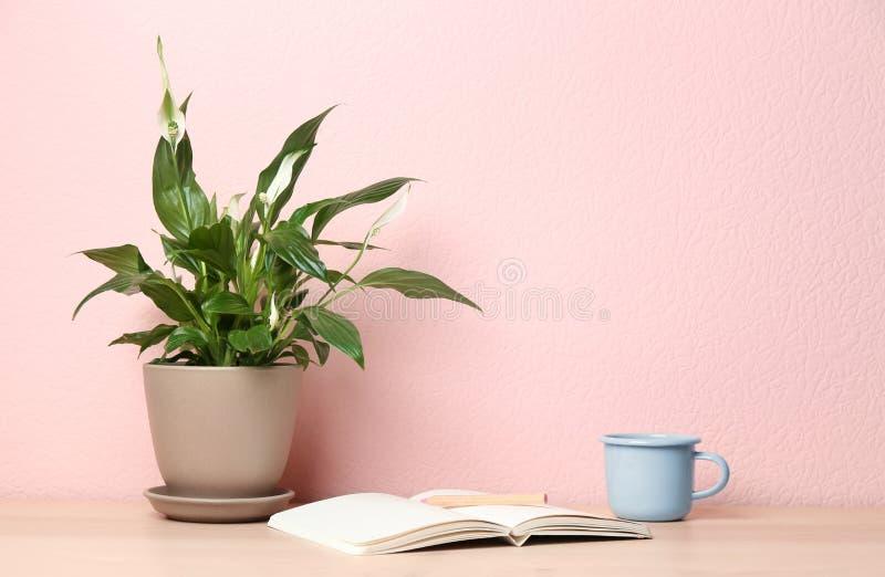 盆的和平百合植物、杯子和笔记本在木桌上在颜色墙壁附近 免版税库存图片