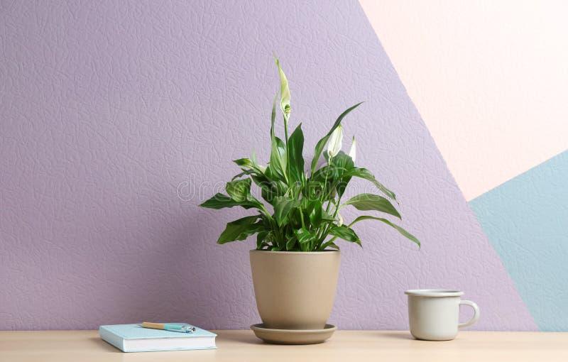 盆的和平百合植物、杯子和笔记本在木桌上 免版税库存图片