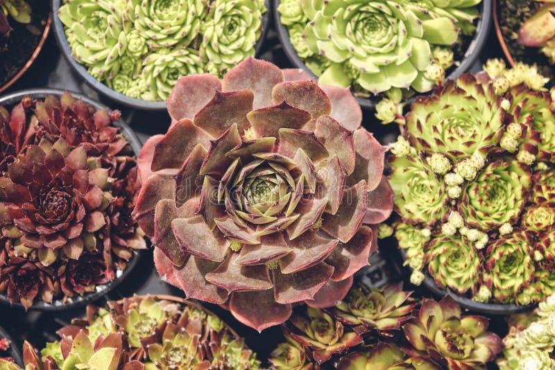 盆的多汁植物收藏 库存图片