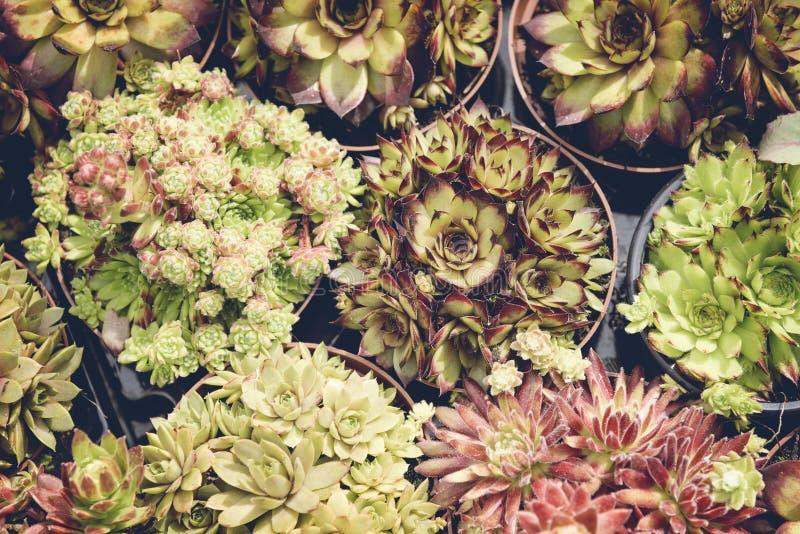 盆的多汁植物背景 库存图片